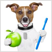 soins dentaires chien